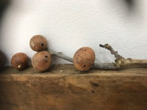Smart Phone Photo of OAK GALLS Courtesy David Faithful, Impact 10